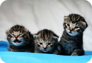 Kittens by Mathias Erhart on Flickr. Licenced by Creative Commons.